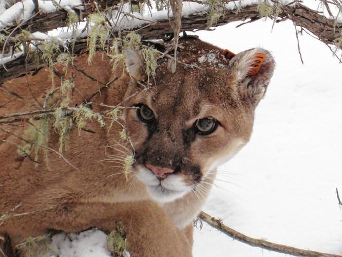 barnstead cougar women Backpage seizure.